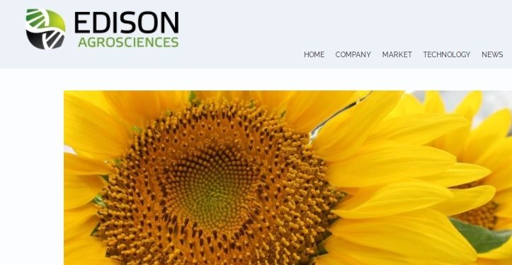 U.S. agro-science firm gets $1M grant to research sunflower latex