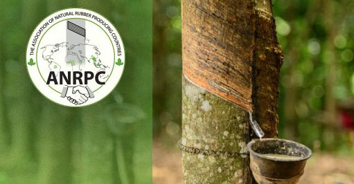 Natural rubber demand, production outlook lowered, again