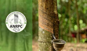 World Natural Rubber Production Drops In January February